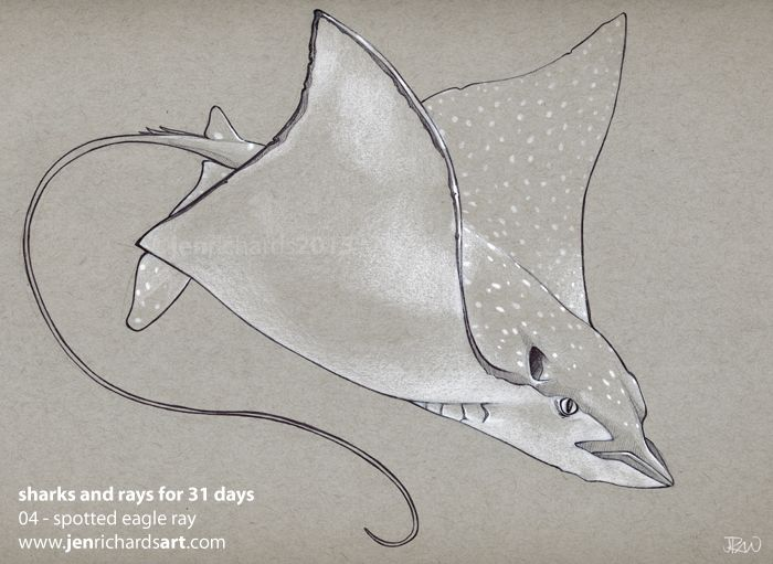 04 - Spotted eagle ray - Biro, white gel pen and white pencil.