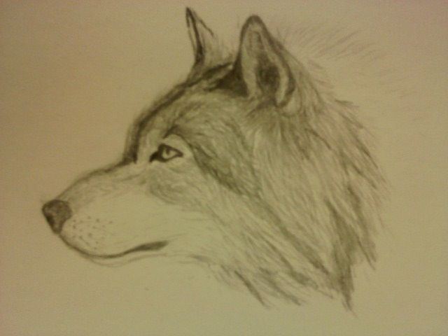Easy Wolf Drawings In Pencil | www.imgkid.com - The Image ...