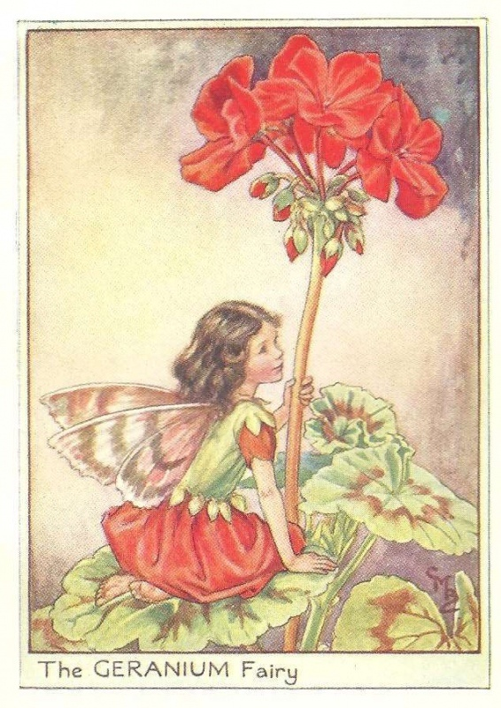 http://www.wellandantiquemaps.co.uk/lg_images/The-Geranium-Fairy.jpg