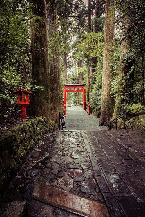Hakone, Japan. Tori gate on wooded path