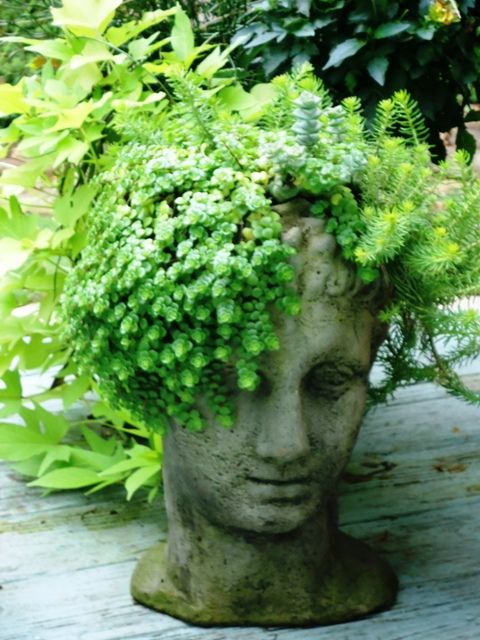 The 25 Best Head Planters Ideas On Pinterest Afro Hair