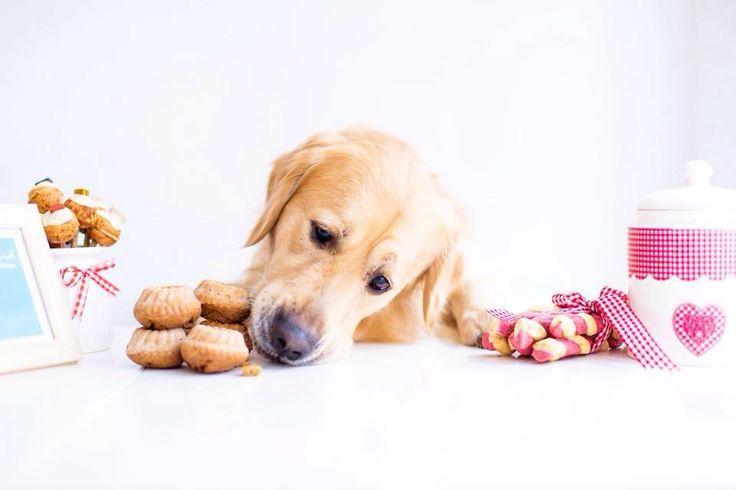 Ausflugsziele & Sehenswürdigkeiten in Wien mit Hund  Die Bäckerei Backhund ist der erste dekorative Backshop für Hunde in Wien. Was im Online Shop begann, verzaubert nun auch Wiener Stadthunde im Geschäft. Hundekuchen, Hundetorten, Hundekekse, CakePops, Hundeeis, Pralinen und viele andere Leckerlis verwöhnen hier Ihren vierbeinigen Liebling.   #urlaubmithund #hunde #wien #dogs #backhund