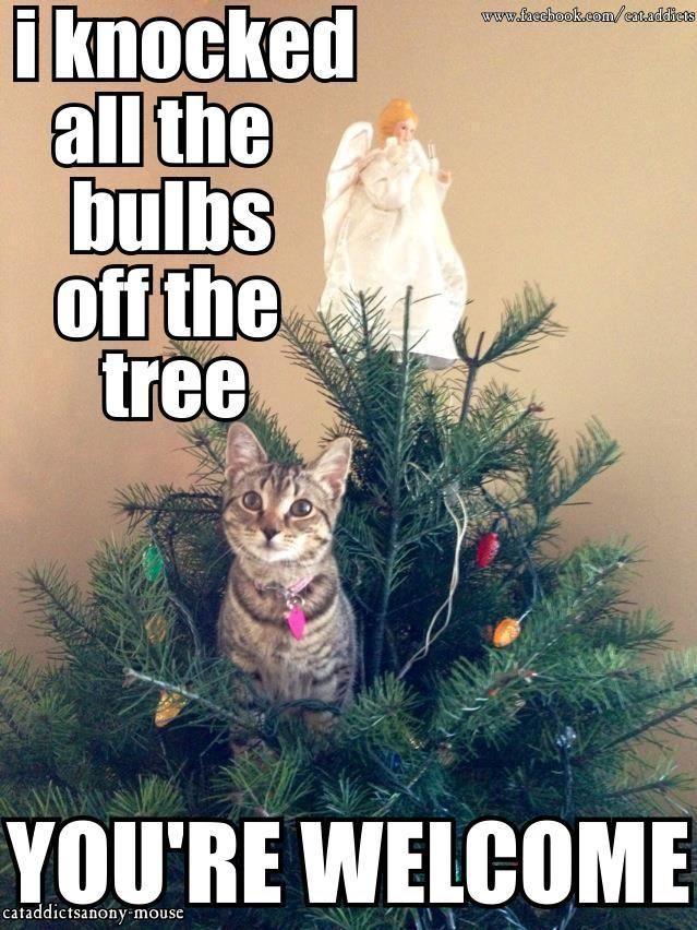 Funny Christmas Tree Meme : Cat knocks down the christmas tree funny photos and