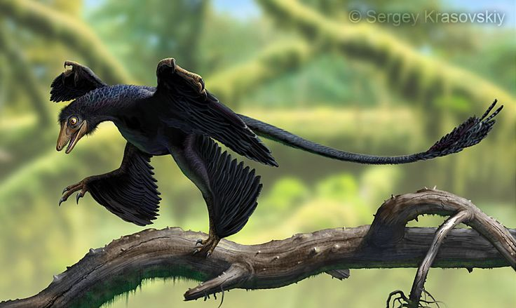 Awesome and ultra realistic depiction of a Microraptor by ~atrox1 on deviantART