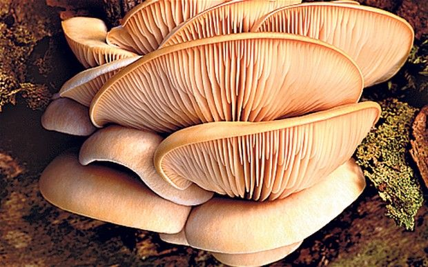 How to grow your own mushrooms: Autumn is the perfect time to turn your attention to mushrooms, in the wild and to grow in your own garden.