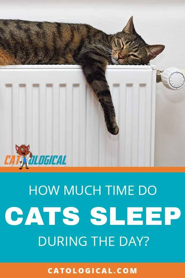 How Much Do Cats Sleep During The Day How Many Hours Are Needed Cat Sleeping Cat Parenting Grumpy Cat Humor