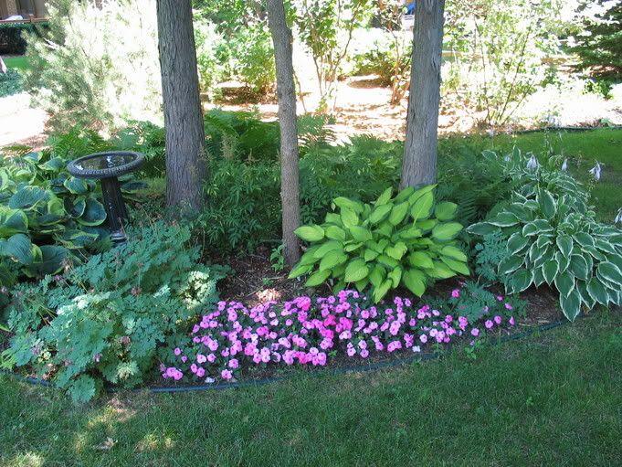 69 best ideas about garden on Pinterest Gardens Hosta