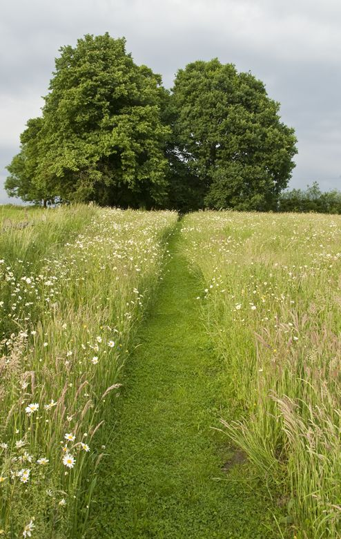 Mown path through field