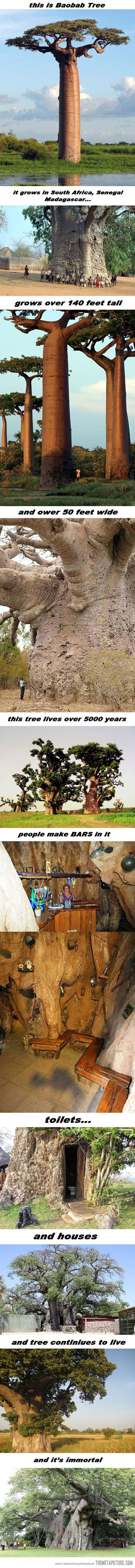 The most amazing tree on Earth