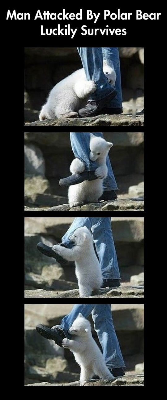 A Horrible Attack By a Vicious Beast // funny pictures - funny photos - funny images - funny pics - funny quotes - #lol #humor #funnypictures