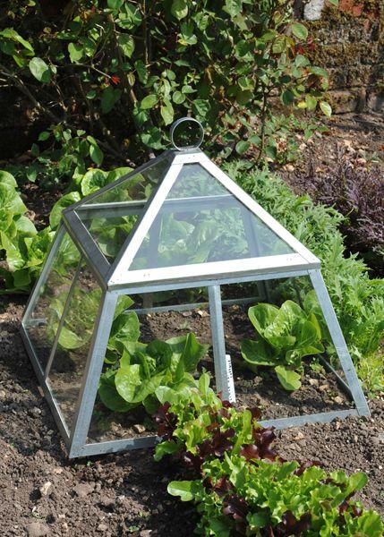 17 best ideas about garden cloche on pinterest terrarium for Garden cloche designs