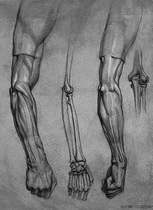 Hôm nay Blogmythuat xin được giới thiệu đến các bạn một số bài vẽ nghiên cứu giải phẫu của sinh viên Nga. Như đã biết Giải Phẫu Tạo Hình ...