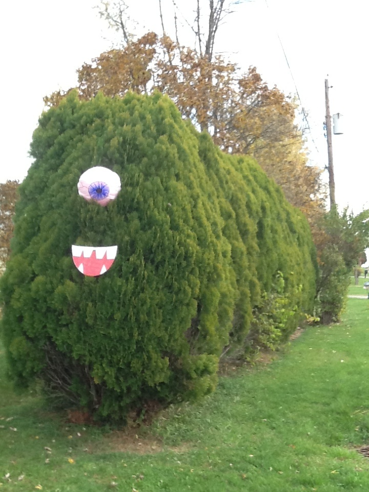 We made it from pinterest! Monster hedges out of a bouncy ball and trash bag. For the mouth we used a cut-out pizza box!