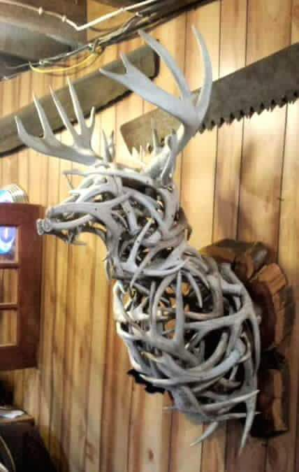 Awesome deer mount out of sheds