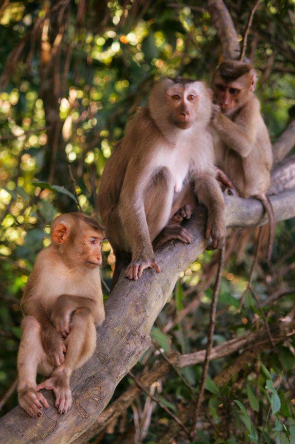 Thailand || Khao Yai National Park || Aapjes