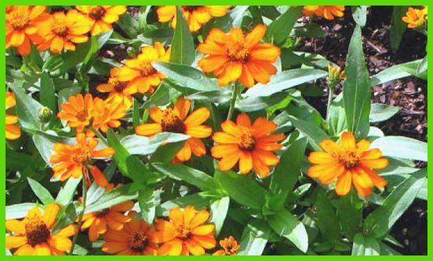 List Of Annual Flowers- Delightful for you to my personal blog, within this time I'm going to explain to you ....