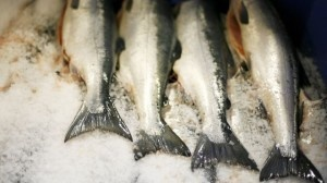 Calcitonin salmon cancer risk appears plausible, FDA staff say