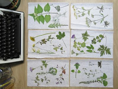 Resultaat van een bloemenpers - results of a flowerpress