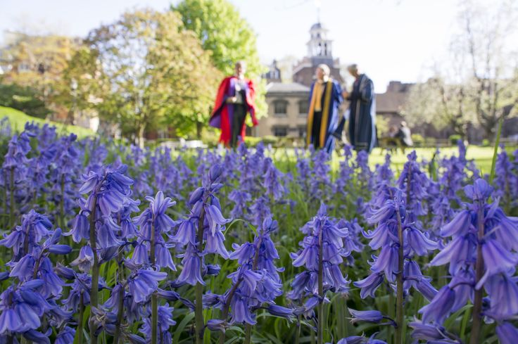 Bluebells and inaugural VIPs - by Dr Marianne Baker