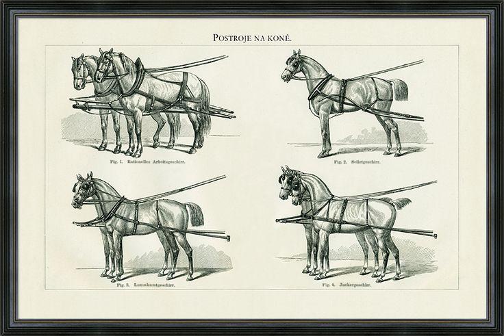 Obraz různých druhů postrojů na koně. Detailní kresba z konce 19. století.