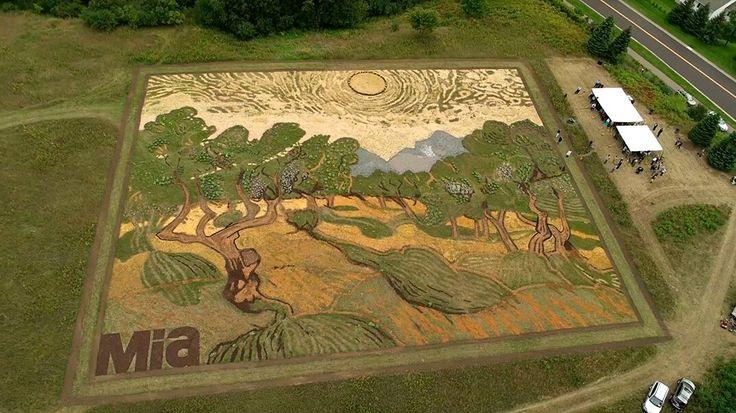 """Artista coltiva 5000 mq di terra per creare la sua versione del dipinto """"Ulivi"""" di Van Gogh"""