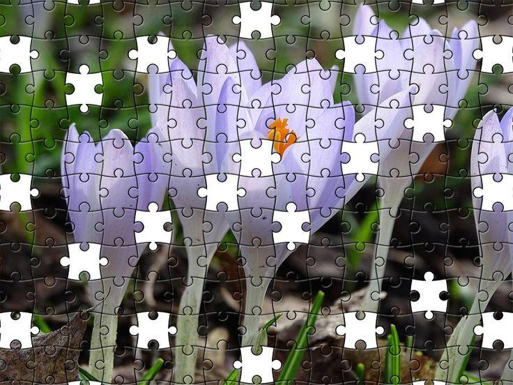 Free Jigsaw Puzzle Online - Crocus