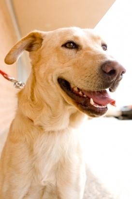 BOGO Buddy: Humane Society of West Texas