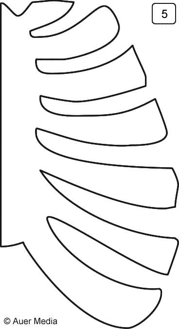 skeleton ribcage  template