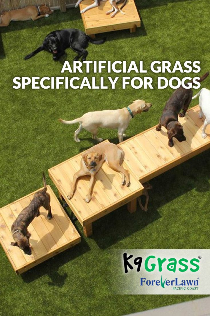 K9Grass, the artificial grass designed specifically for dogs, is a cleaner…