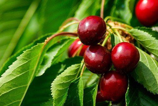 Cireşe, Cherry, Fructe Rosii