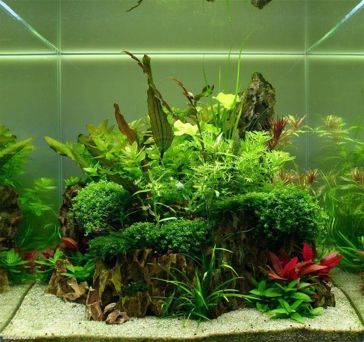 708 Best Images About Aquascaping