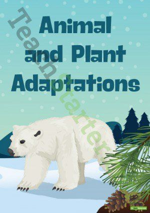 Plant and Animal Adaptations Resource Pack
