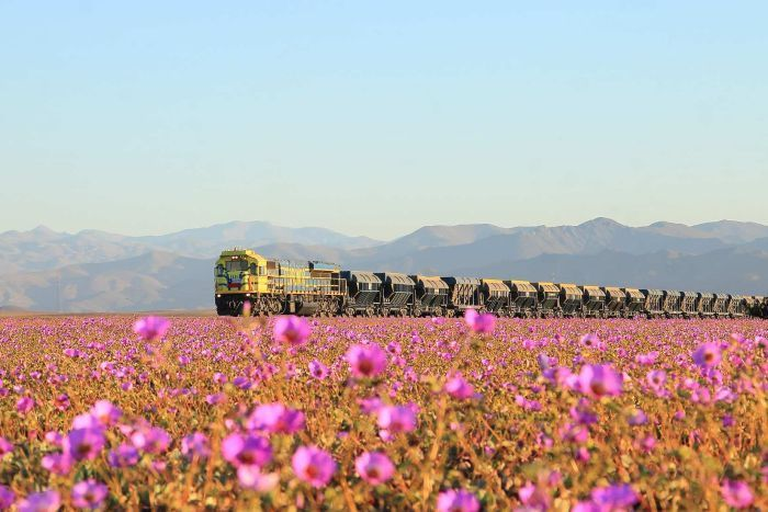 Train goes through Atacama Desert, northern Chile.