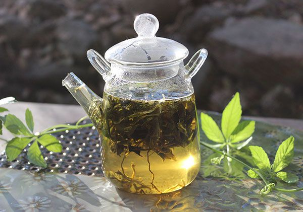 Gynostemma tea benefits the body via its restorative immune modulating properties that build adaptive energy. Saponin gypenosides and polysaccharides exhibit antioxidant and anti-inflammatory effects.