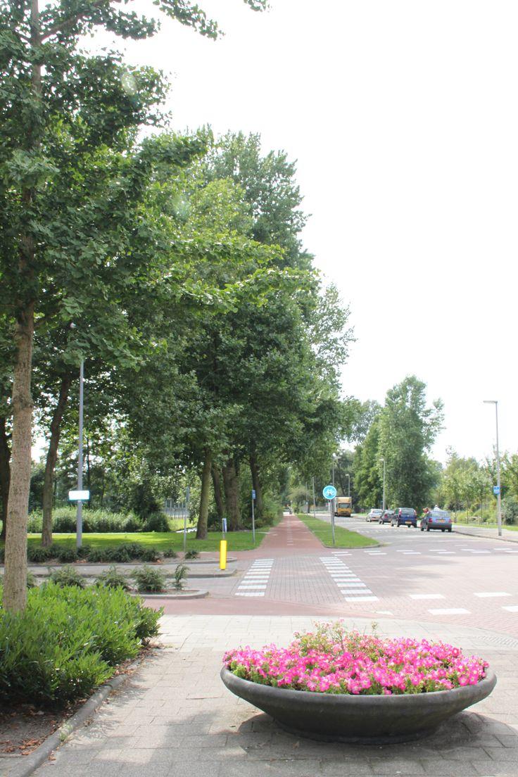 over de koningslaan @HetLageLand Rotterdam,The Netherlands
