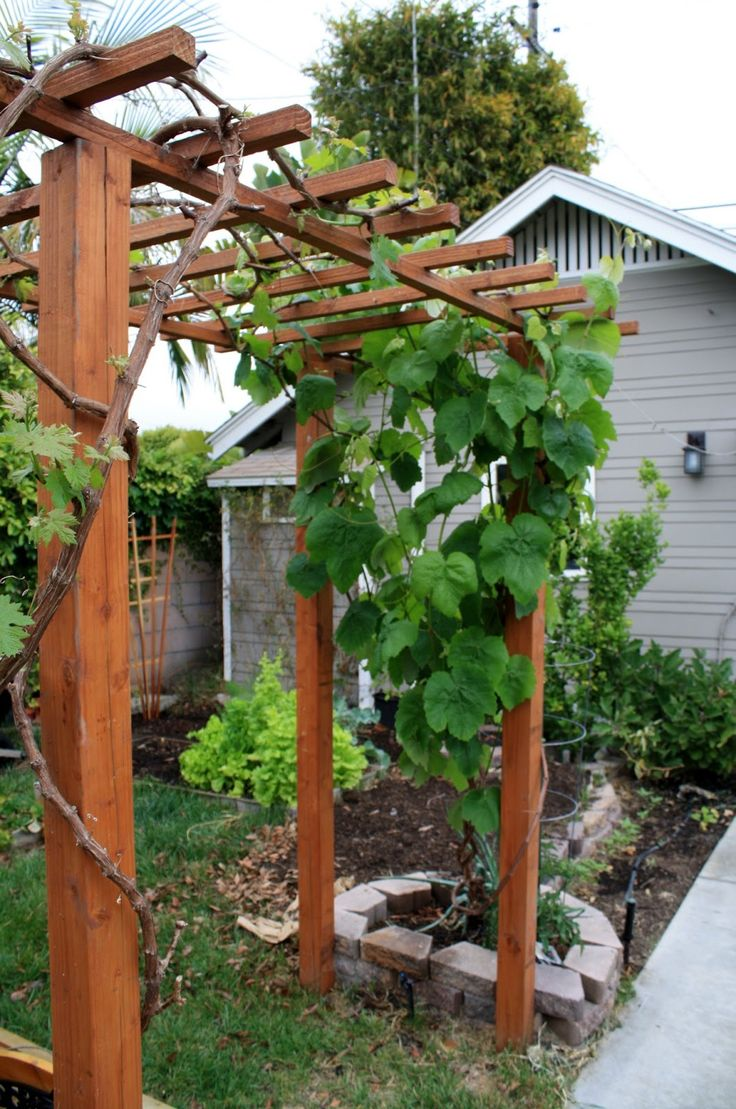 Images Grape Arbors Google Search Grape Arbor Pergola