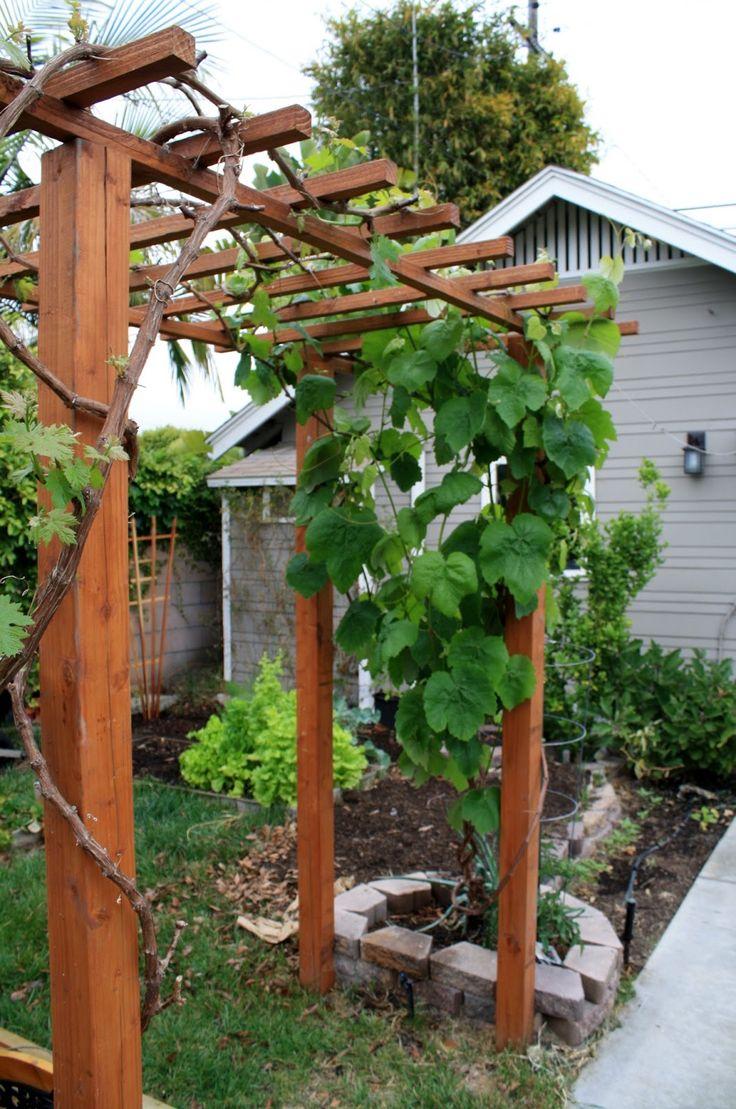 Images Grape Arbors Google Search Grape Arbor Pergola