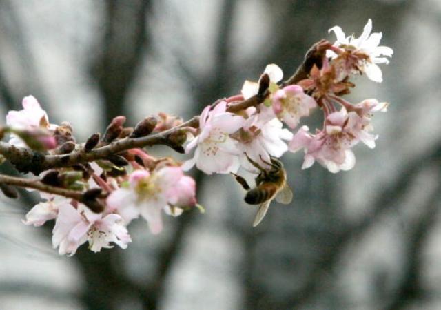 Plantas de jardim pré-tratadas com pesticidas estão matando abelhas   #Agricultura, #Bayer, #EPA, #Neonic, #Neonicotinóides, #Pesticidas, #Polinizadores, #Syngenta