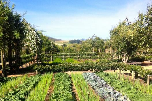 Posh Agritourism-Babylonstoren- Thinking Outside the Boxwood