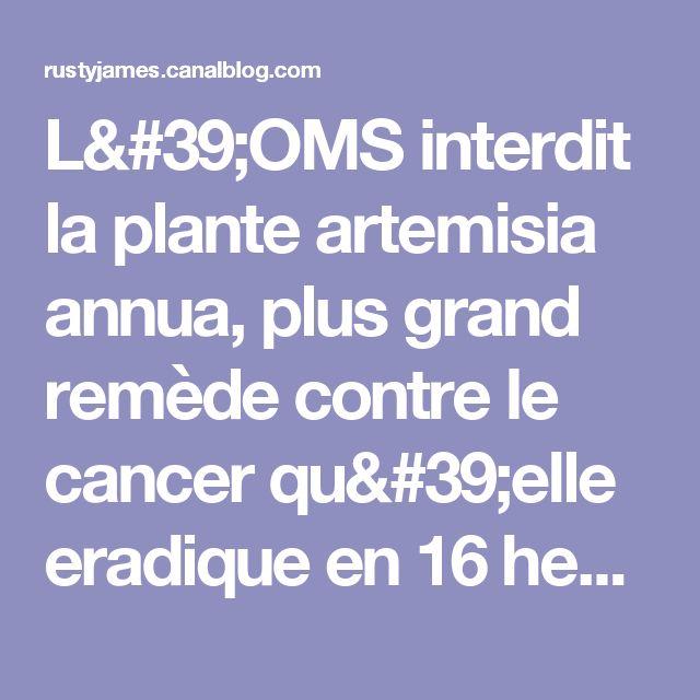 L'OMS interdit la plante artemisia annua, plus grand remède contre le cancer qu'elle eradique en 16 heures - rusty james news