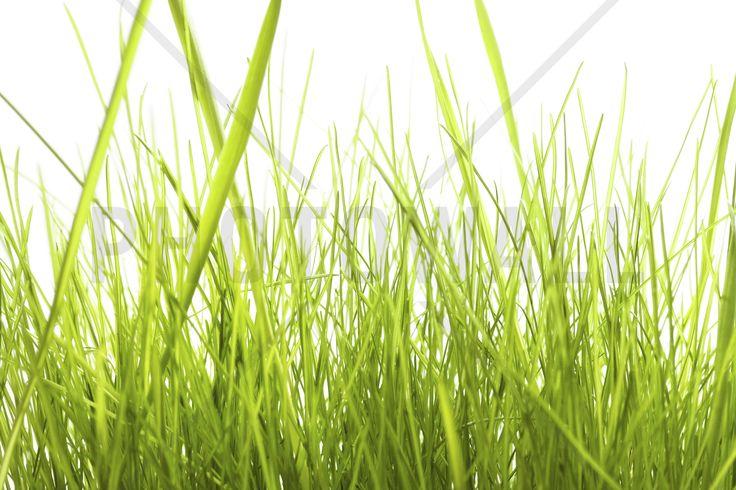 High Grass - Fototapeter & Tapeter - Photowall
