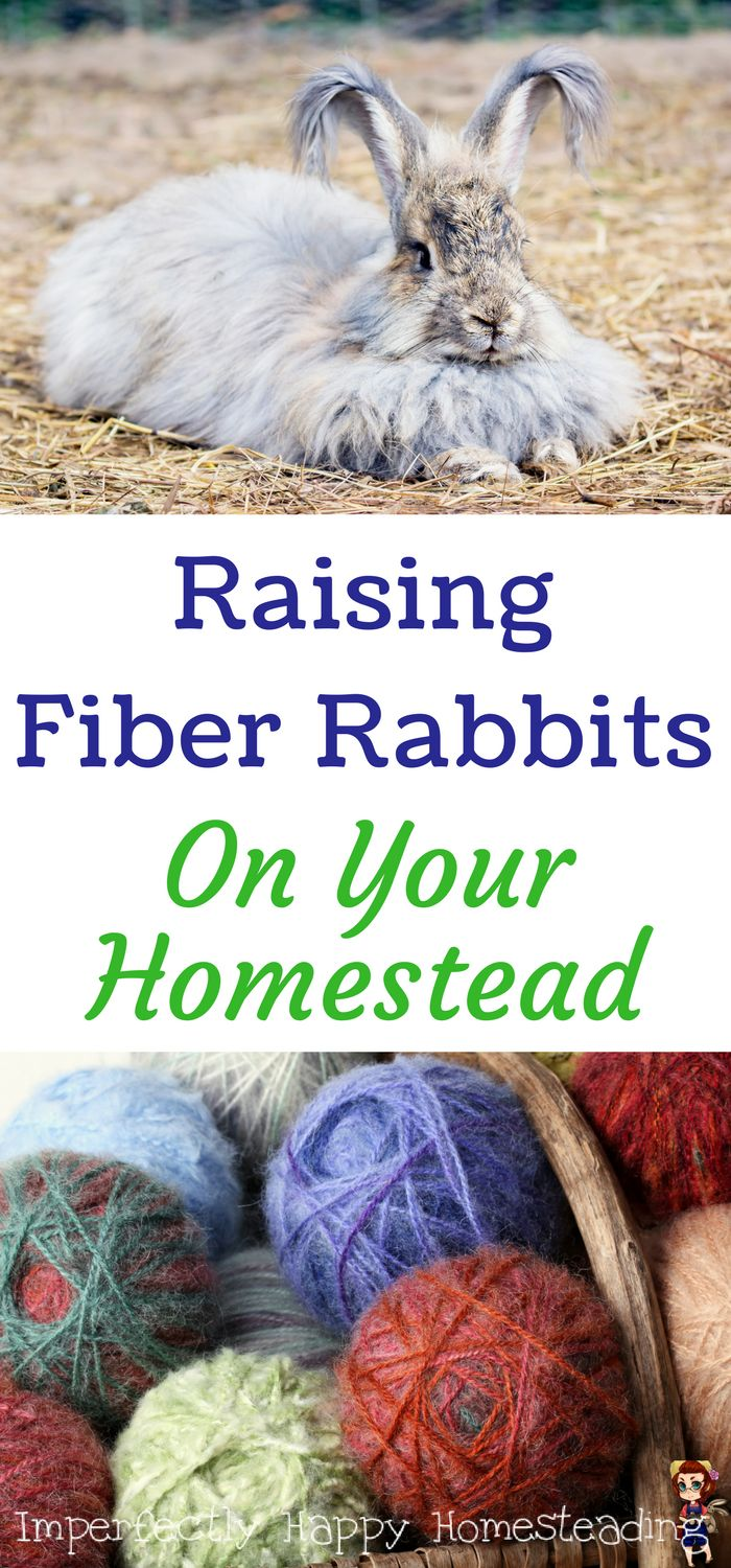 What you need to know about raising fiber rabbits on your homestead.
