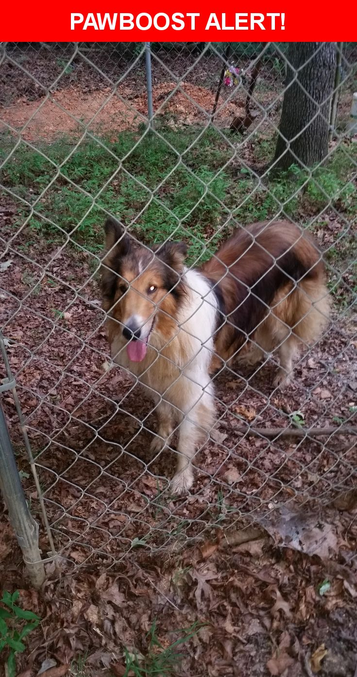 Is this your lost pet? Found in Keswick, VA 22947. Please spread the word so we can find the owner!  Collie has collar but no information on it with what looks like a cattle tag on the collar. I have had animal control take him to the Albermarle SPCA.  Near Louisa Rd & Keswick Rd