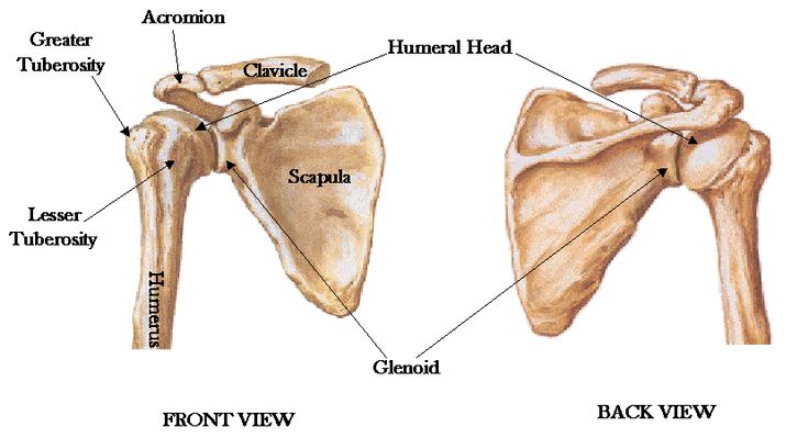 shoulder joint - Google Search