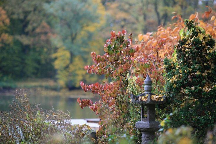 Blog sobre plantas jardines y paisajismo plantas for Plantas paisajismo