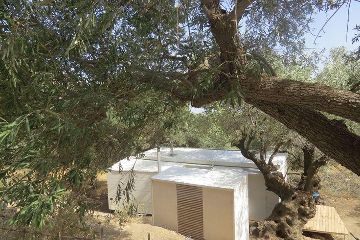 hidden away in the olive groves