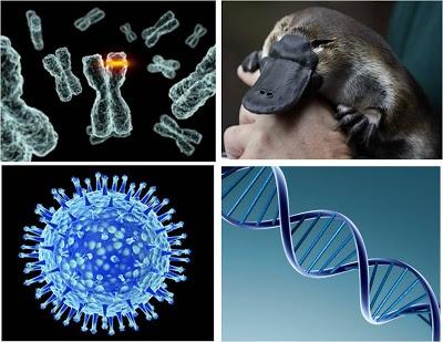La mutación es la clave de la evolución y de la supervivencia de especies y de empresas. http://www.esmeraldadiazaroca.com/2012/10/los-albaniles-tambien-son-20-y-adoran.html