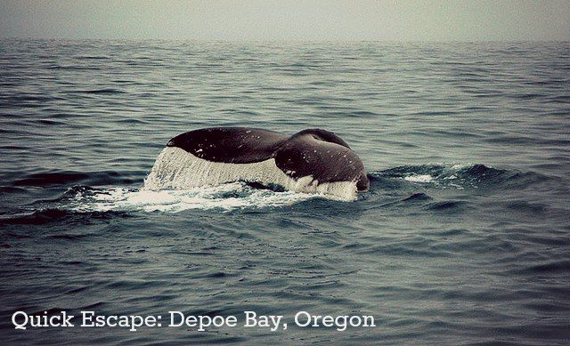 Quick Escape: Depoe Bay on the Oregon Coast for winter storms and migrating whales