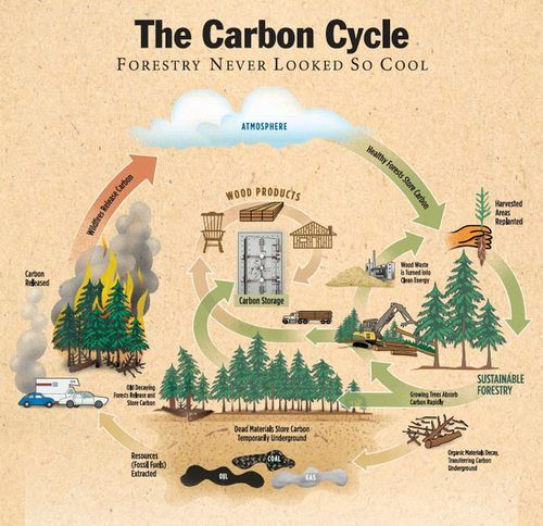 Environmental Impact Of Guadua Bamboo Guadua Bamboo Carbon Cycle Carbon Sequestration Environmental Science