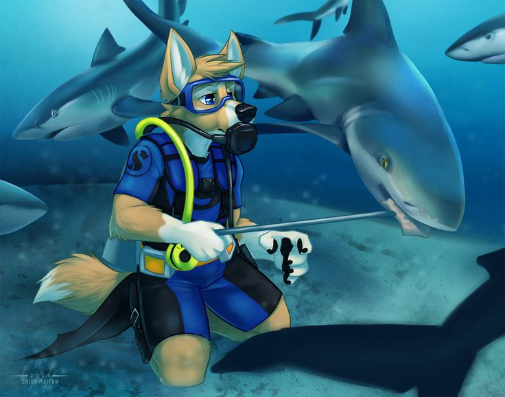 how to draw shark furries